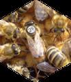Honiggläser und Karton