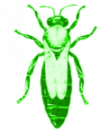Farbweisel grün